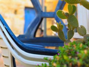 マルタ島マルサシュロックの街角にあったサボテン